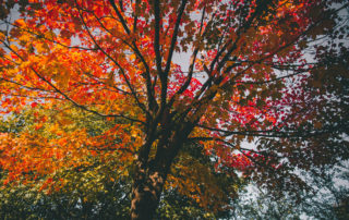 Autumn activities for the elderly in the Vermont area